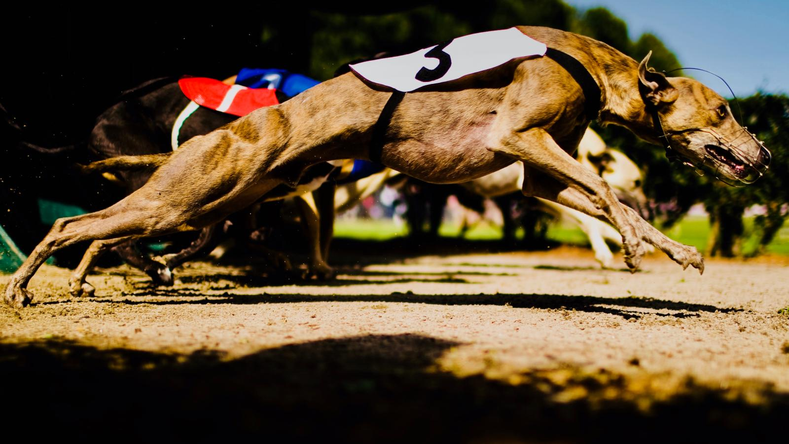 Florida Greyhound Racing Ban Challenges