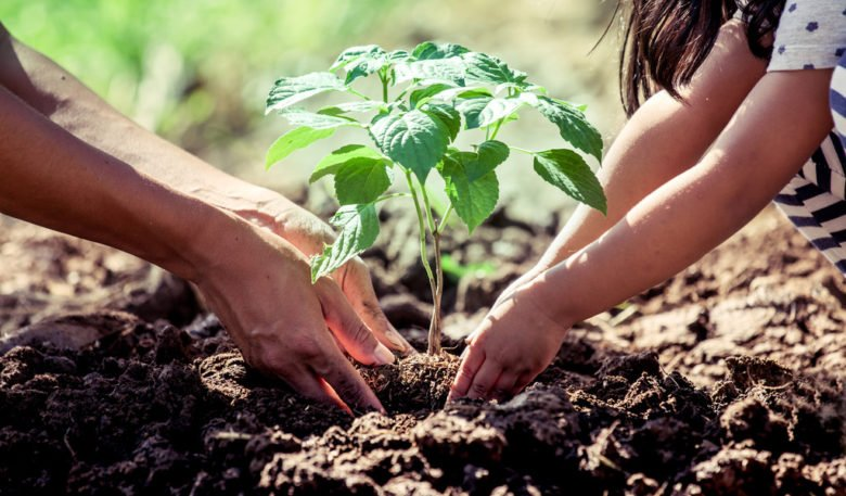 Betsson Group Joins QLZH Foundation Commiting To Plant 1m Trees