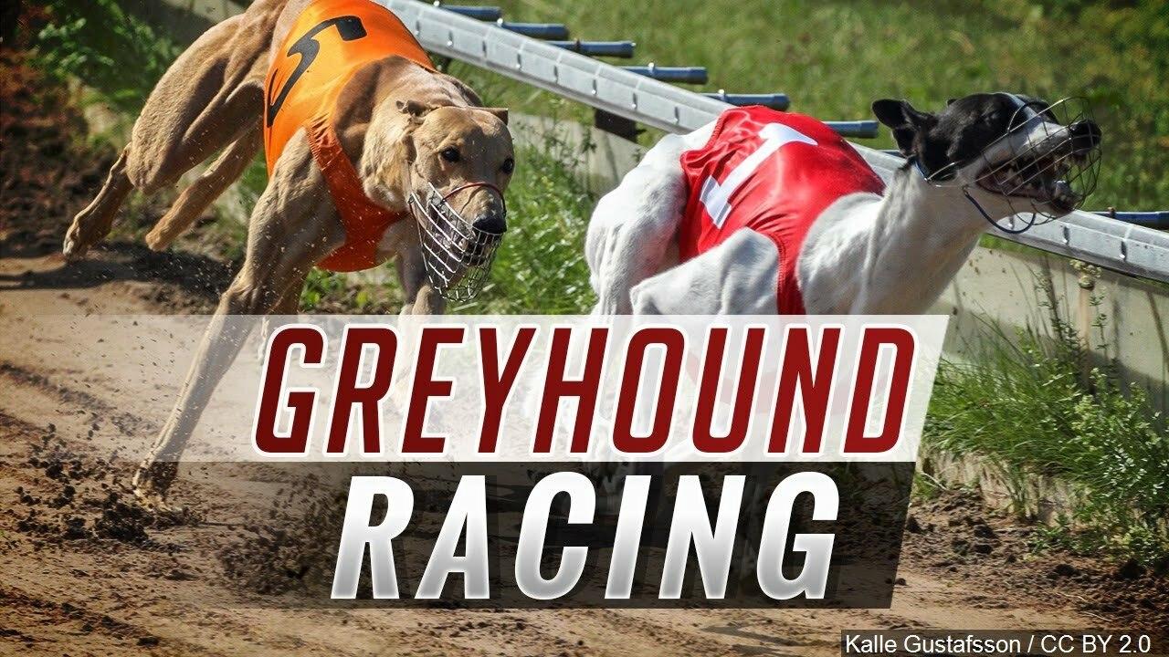 West Virginia Greyhound Racing Safe For Now