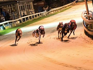 ARC Announce Greyhound Trainer Support Through COVID-19