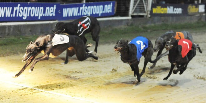 Colossus Bets Moves To Back Central Park Kennel Sweepstakes