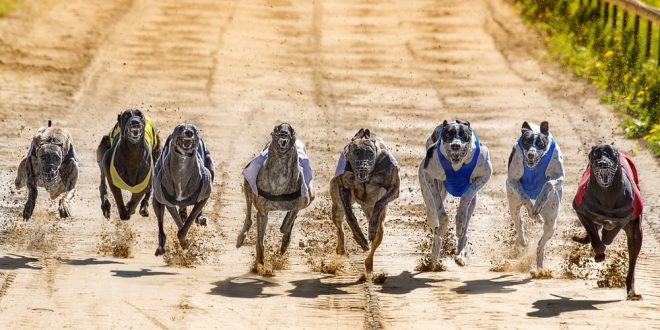 Greyhound Racing Suspended Due To COVID-19