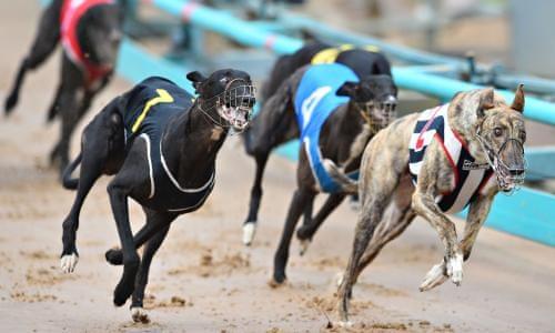 Allsported Utilises Greyhound Racing With API