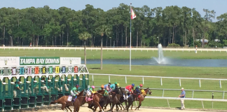 horse racing live stream guide - tampa bay downs