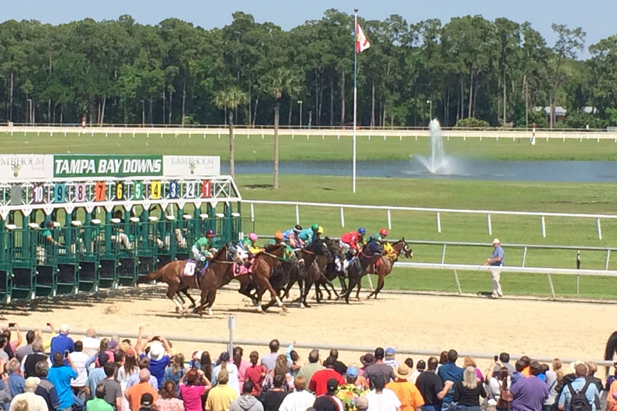 LIVE Stream Horse Racing – Tampa Bay Downs & Fonner Park Tonight