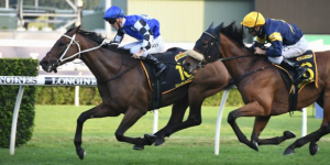 Sydney Cup LIVE Stream – How To Watch Online 2020