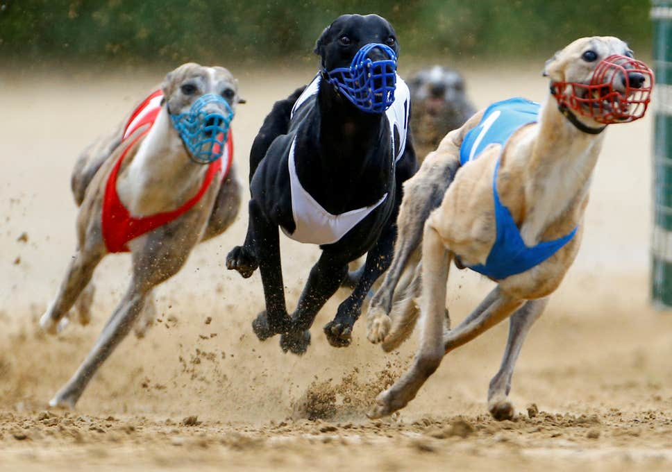SIS Announce Greyhound Schedule To Resume June 1