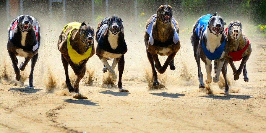 SIS Expands Greyhound Offering With  Irish Greyhound Derby