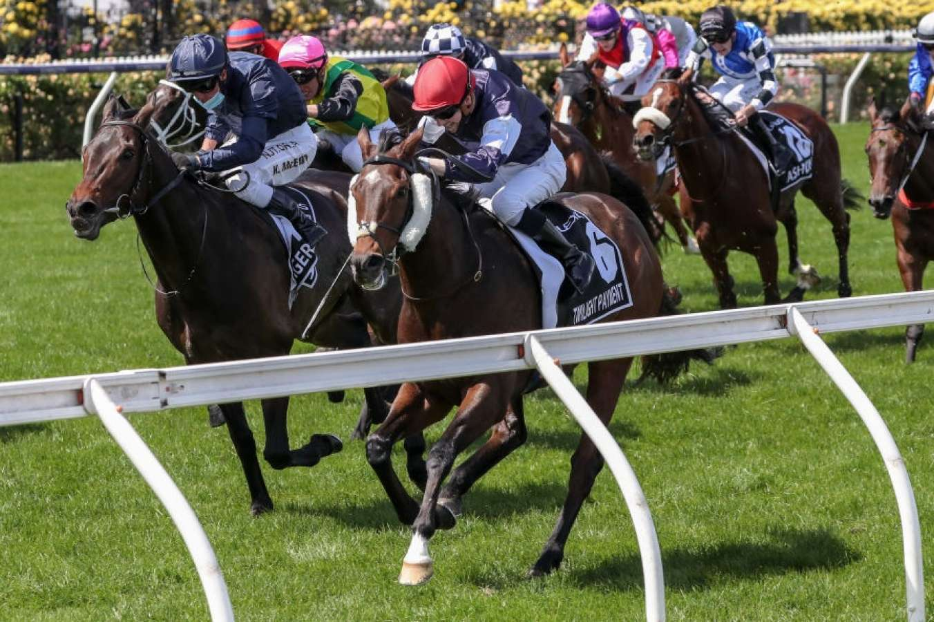 OpenSports Handle Record Breaking Bets During Melbourne Cup