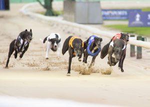 MansionBet Signs ARC Agreement For Greyhound Races