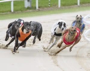 British Greyhound Racing Fund Announce £1.1m Greyhound Support Package