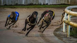 Entain Secures ARC Broadcast Rights To Revitalise Greyhound Racing