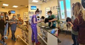 Pragmatic Play Donates €7,700 To Homeless Animal Hospital Romania