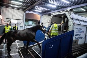 UK Racing Issues Concerns Of Brexit Red Tape For Equine Travel